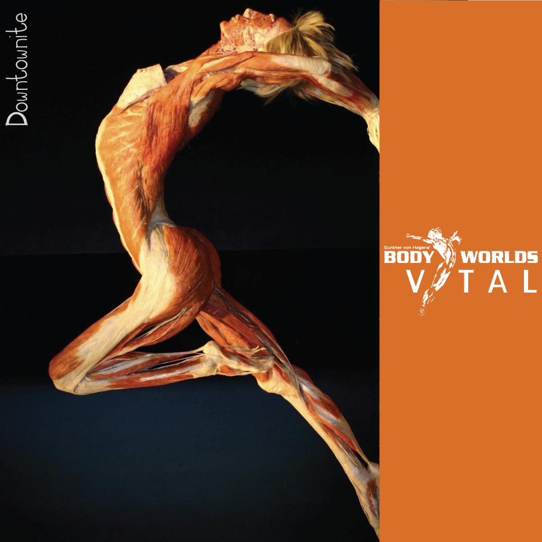 Right Or Wrong? My Take On The Controversial Body Worlds Vital Show ...